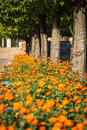 Potted plants and flowers on the streets of Cordoba,Spain Royalty Free Stock Photo