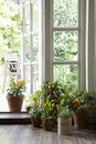 Potted plants on hardwood floor by open door in house Stock Photo
