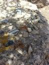 Pottery shards Tsankawe New Mexico Royalty Free Stock Photo