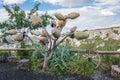 Pottery tree in Turkey Royalty Free Stock Photo