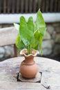 Pottery Vase tree Royalty Free Stock Photo