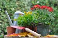 Potting autumn flowers fall flower pots and tool for Royalty Free Stock Images