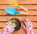 Potting flowers spring in the garden Stock Photo