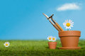 Potting tools on grass with daisies large and small plant pots containing english daisy flowers and a grassy lawn against a bright Stock Photography