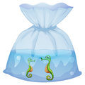 A pouch with seahorses illustration of on white background Stock Photo