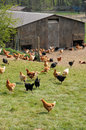 Poultry farming in Brueil en Vexin Stock Photo