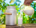 Pouring milk in the glass on background of nature Royalty Free Stock Images