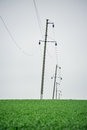 Power line in a field of wheat Royalty Free Stock Photo