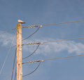 Power pole wooden with seagull perched on top Royalty Free Stock Photo