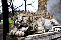 Powerfull sculpture of stone lion in lviv Royalty Free Stock Photos