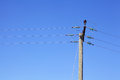 Powerline under blue sky the Stock Photos
