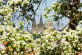 Prague castle blossoming apple tree in the background with Stock Photography