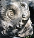 Prague Zoo - ancient ammonite fossils