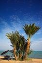 Praia do paraíso da palma Fotos de Stock