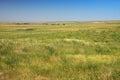 Prairie in dakota detail from Royalty Free Stock Image