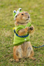 Prairie dogs dress up as a green frog standing upright on field Stock Photo