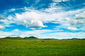 Prairie mongolia under the blue sky Stock Photo
