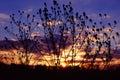 Prairie Sunset Landscape Illinois Royalty Free Stock Photo