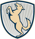 Prancing dog side shield illustration of an angry barking mongrel view set inside crest on white background Royalty Free Stock Image