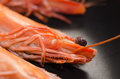 Prawn fresh in preparation for cooking on the plate Stock Photos