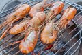 Prawn grilled Royalty Free Stock Photo