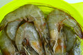 Prawn Group Royalty Free Stock Photo
