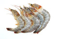 Prawn on white background Royalty Free Stock Photos
