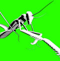 Praying Mantis 15 Royalty Free Stock Photography