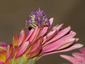 Praying Mantis on flower Royalty Free Stock Photo