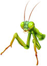 A praying mantis illustration of on white background Stock Image