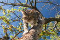 Predator in garden cat slink over the tree branch the on the blue sky background Stock Photo