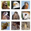 Predators and Prey collage Royalty Free Stock Images