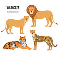 Predatory animals lion, lioness, cheetah, tiger. Wild cats vector set