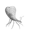 Predatory heart black and white pencil drawing with scary claws Royalty Free Stock Images