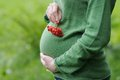 Pregnant woman with ashberry Royalty Free Stock Photo