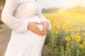 Pregnant woman with heart sign on her belly and sun flower garden. Royalty Free Stock Photo