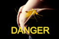 Pregnant woman, imminent danger to the virus Zika Royalty Free Stock Photo