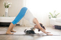 Pregnant woman and puppy practicing dog yoga pose at home Royalty Free Stock Photo
