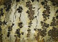 Prehistoric stone with flowered texture background or Royalty Free Stock Photos