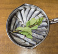 Prepared for cooking baltic herring and bay leaf in pan cut raw a sprig of a stainless steel on a wooden table Royalty Free Stock Photos
