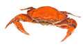 Prepared crab Royalty Free Stock Photography