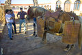 Preparing the lancer horse olivenza spain july preparations of for bullfight day in order to select animals for breed braves Stock Photos