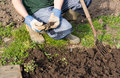 Preparing soil gardener on an allotment Stock Images