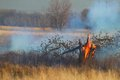 Prescribed burn of grass land or controlled grassland and weeds including fallen tree Stock Photography