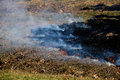 Prescribed burn shot of a controlled forest fire at a state park Royalty Free Stock Photo
