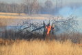 Prescribed burn of weeds grass land and fallen tree in a wildlife refuge Royalty Free Stock Photo