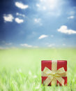 Present on grassy background and blue sky Stock Photography