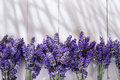 Presentation of lavender flower summer in spa area Stock Image