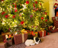 Presents under the christmas tree colorful and a dog Royalty Free Stock Photography