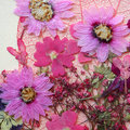 Pressed flowers arrangement in shades of pink and purple on plain off white paper Royalty Free Stock Photos